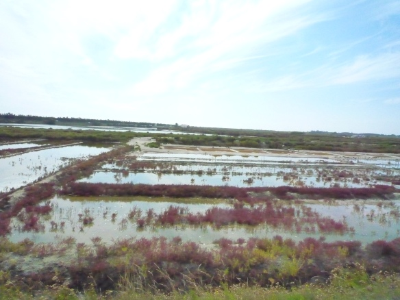 Salt ponds ile de Re