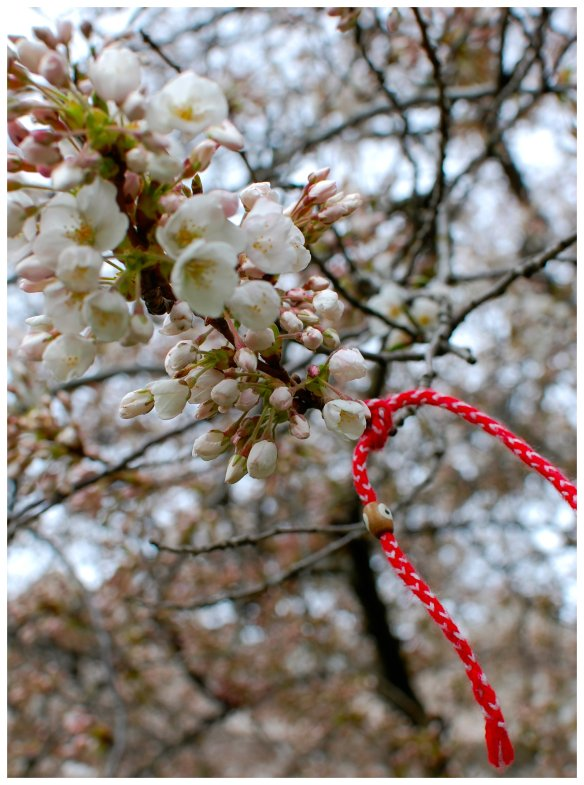 blossom branch with charm
