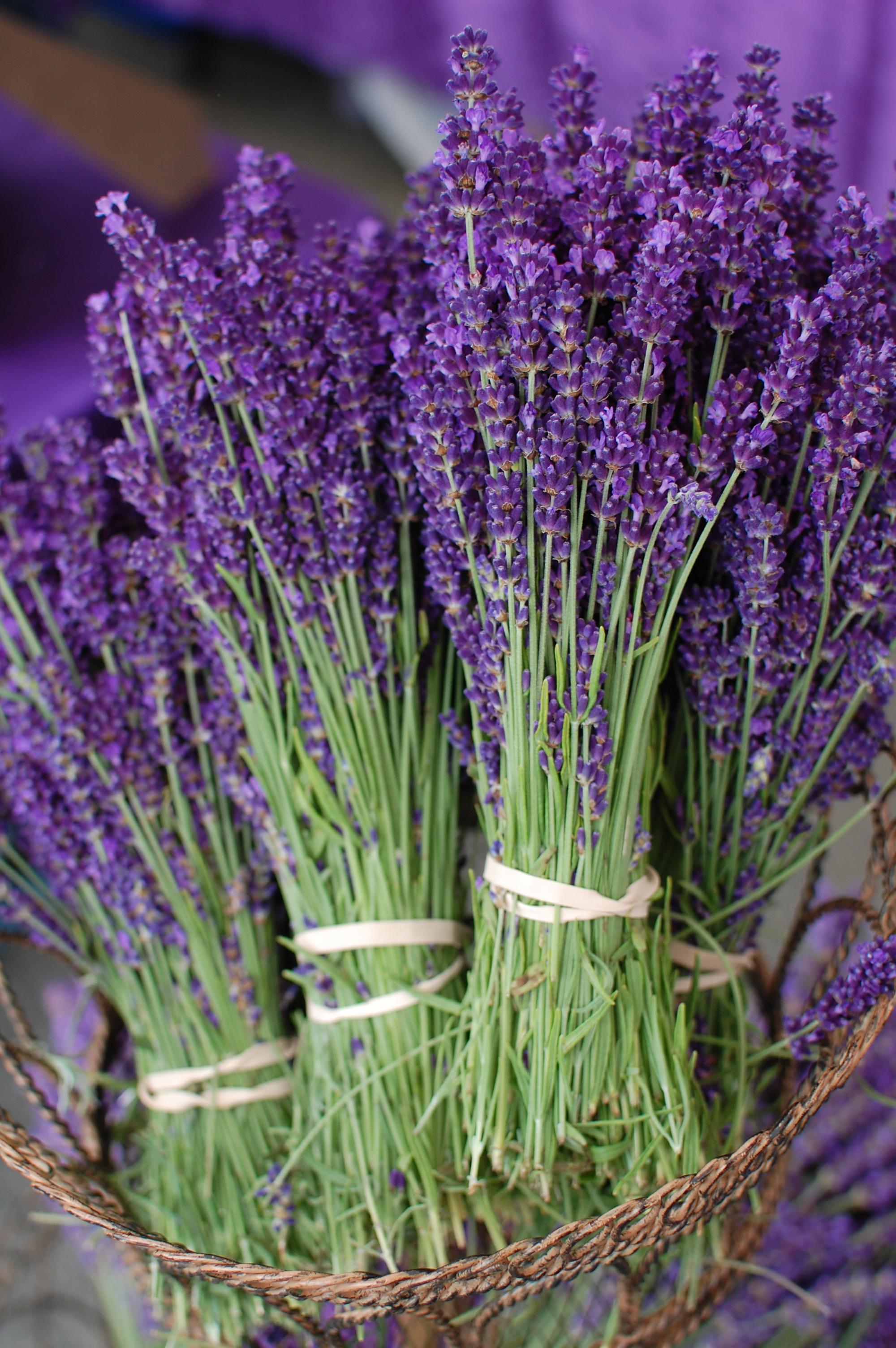 Http Deuxdilettantes Com Tag Lavender